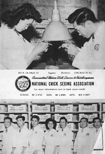 1950-chicago-japanese-american-year-book-ncsa-ad